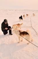 Enregistrement de chiens huskies | Iqaluit NU